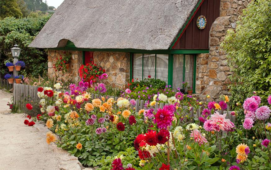 Best Plants for a Cottage Garden and Design Ideas 16