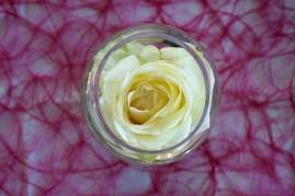 Rose flottante en petit vase boule