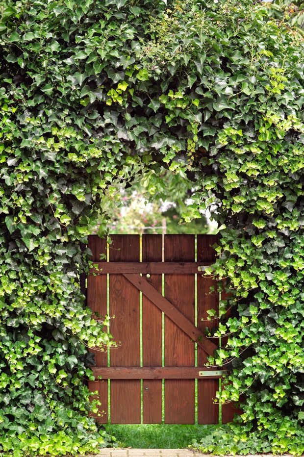Inexpensive Secret Wood Garden Gates 18