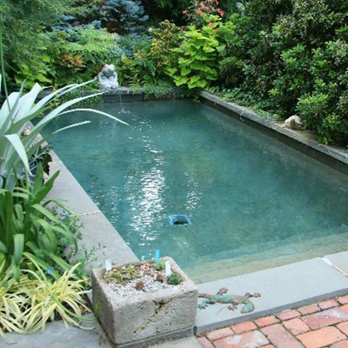 Affordable Small Backyard with Plunge Pool 1
