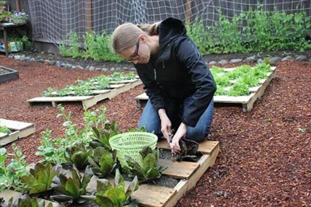 Gardening Ideas With Wood Pallets 10