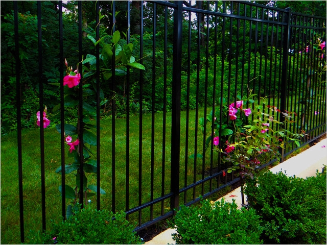 40 Best and Beautiful Climbing Flowers for Fences 65 Iron Fence with Climbing Plants Traditional Landscape Dc Metro by Campbell & Ferrara 3