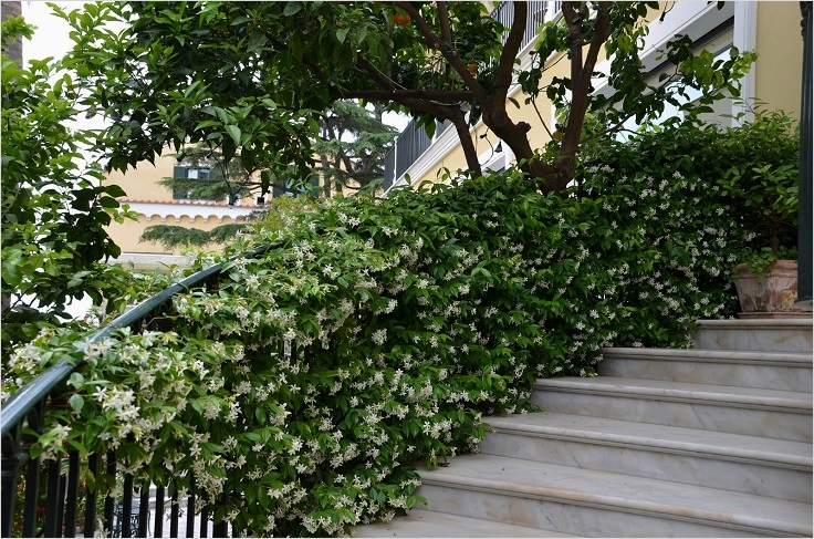 40 Best and Beautiful Climbing Flowers for Fences 99 top 10 Beautiful Climbing Plants for Fences and Walls 1