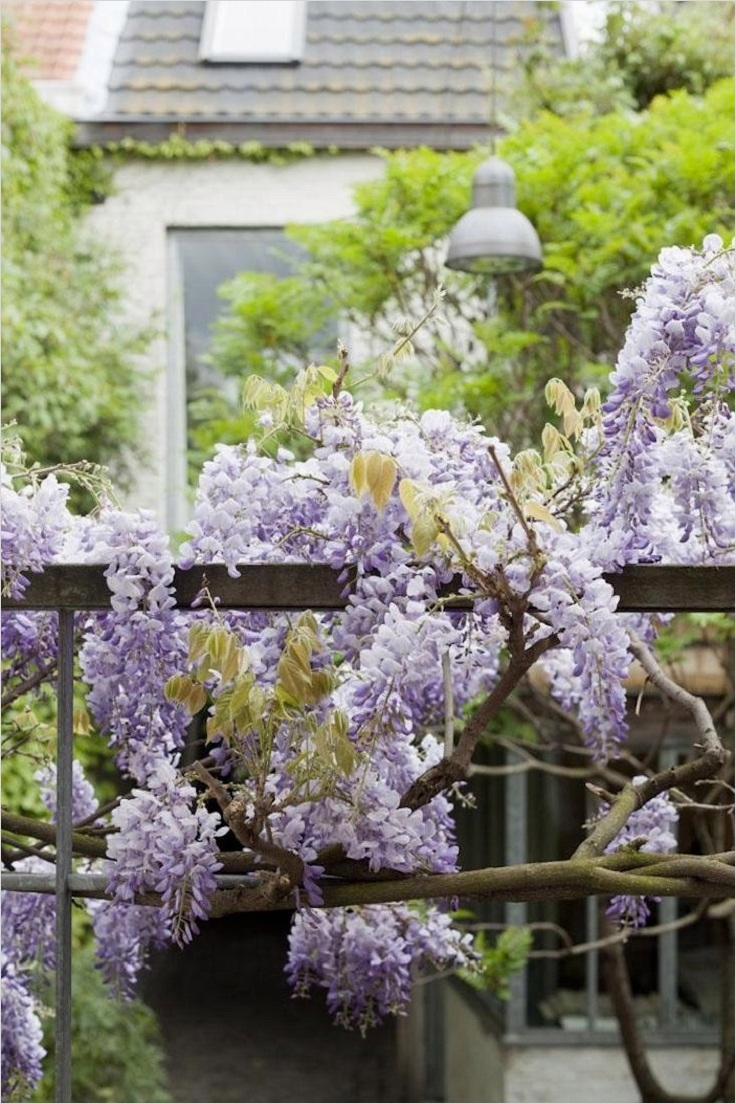 40 Best and Beautiful Climbing Flowers for Fences 29 top 10 Beautiful Climbing Plants for Fences and Walls top Inspired 1