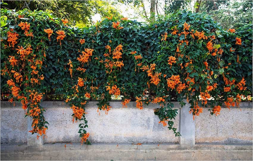 40 Best and Beautiful Climbing Flowers for Fences 83 45 Beautiful Fence Planters Decorate Your Garden Fence Designing Idea 5