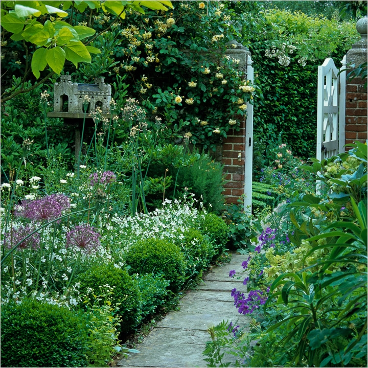 40 Best and Beautiful Climbing Flowers for Fences 56 Climbing Plants 4