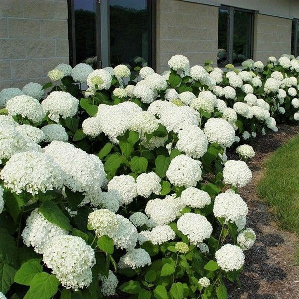 Inspiring Hydrangeas Landscaping Design Ideas To Copy Right Now 09