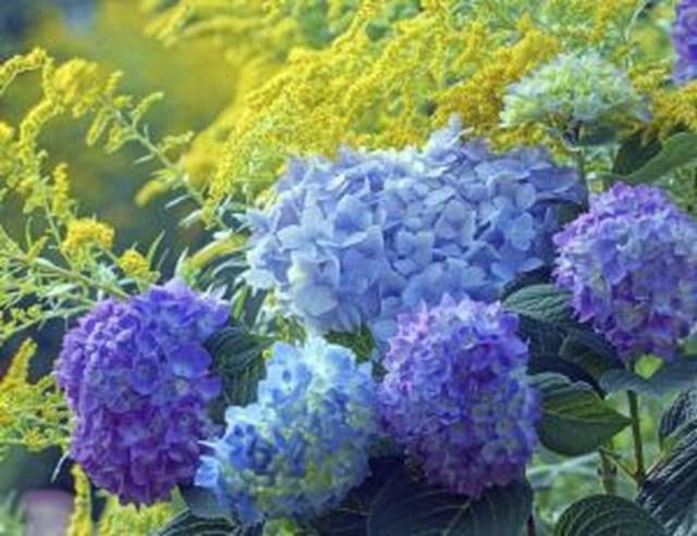 Inspiring Hydrangeas Landscaping Design Ideas To Copy Right Now 11