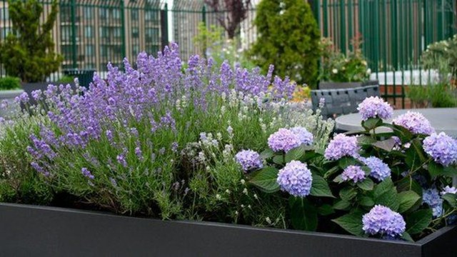 Inspiring Hydrangeas Landscaping Design Ideas To Copy Right Now 16