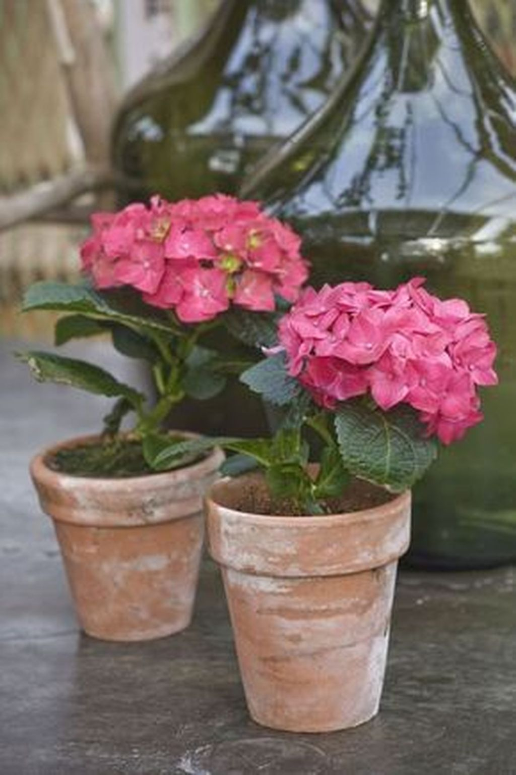 Inspiring Hydrangeas Landscaping Design Ideas To Copy Right Now 25