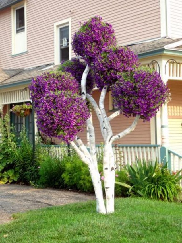 Lovely Flowering Tree Ideas For Home Yard To Copy Now 07