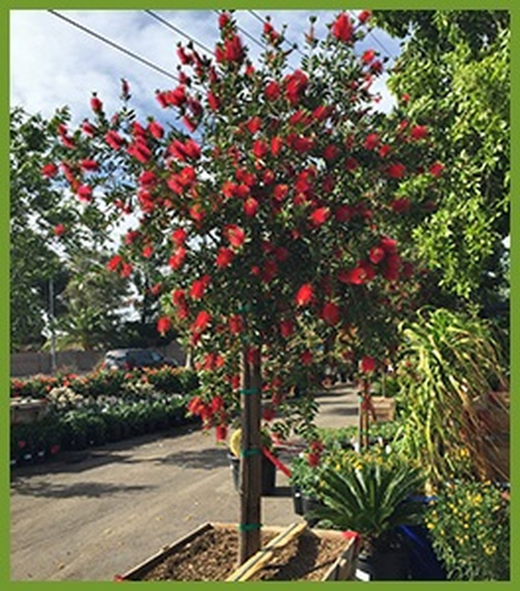 Lovely Flowering Tree Ideas For Home Yard To Copy Now 12