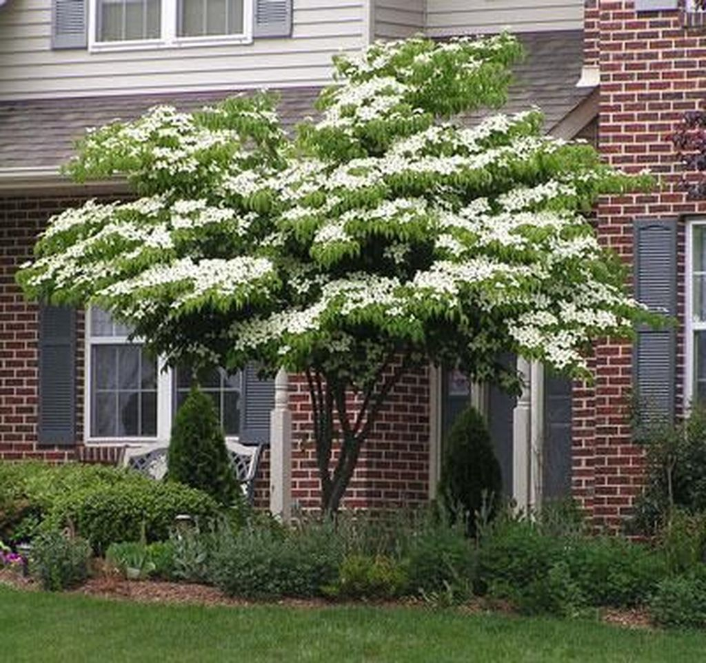 Lovely Flowering Tree Ideas For Home Yard To Copy Now 16