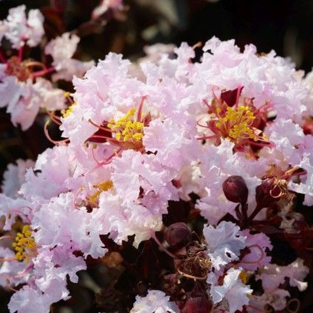 Lovely Flowering Tree Ideas For Home Yard To Copy Now 18