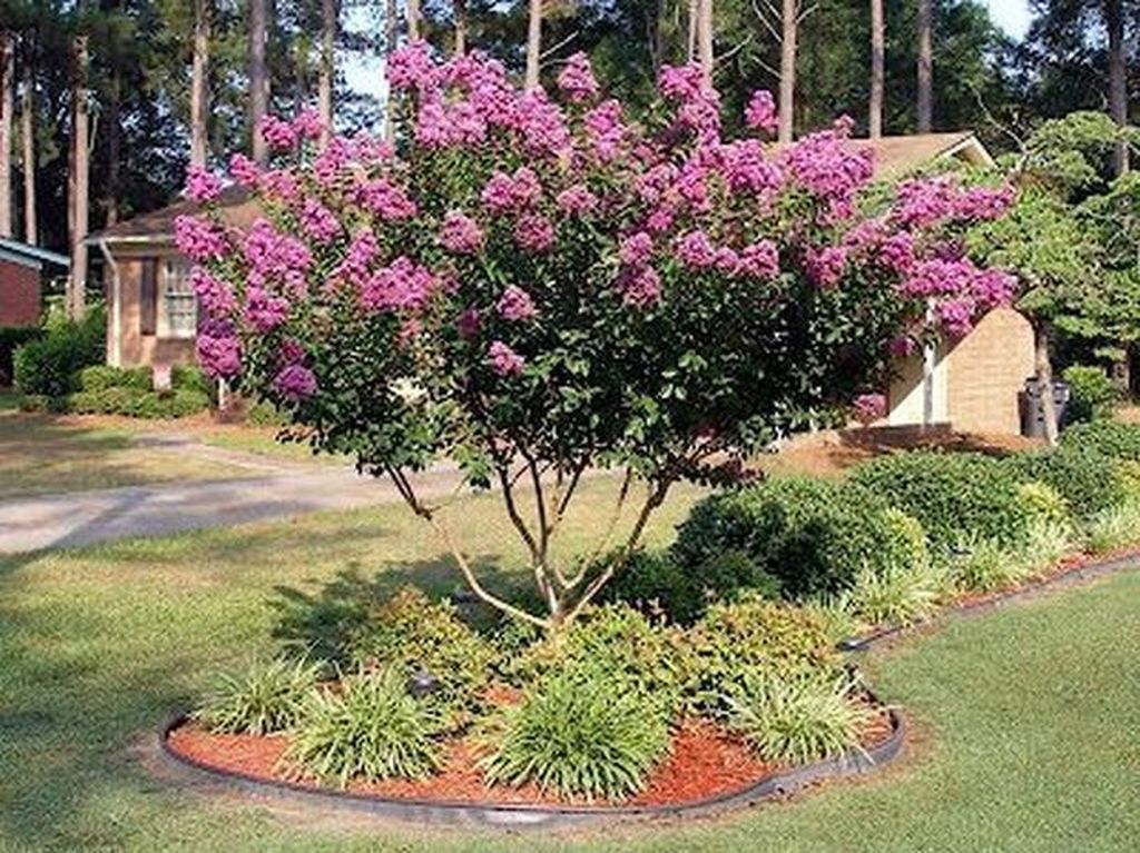 Lovely Flowering Tree Ideas For Home Yard To Copy Now 29