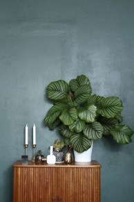 Smart Interior Design Ideas With Plants For Home 12