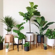 Smart Interior Design Ideas With Plants For Home 17