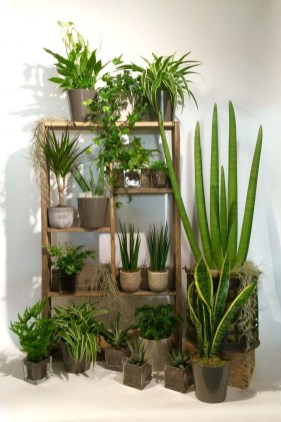 Smart Interior Design Ideas With Plants For Home 25