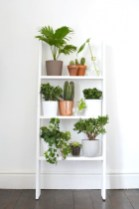 Smart Interior Design Ideas With Plants For Home 33