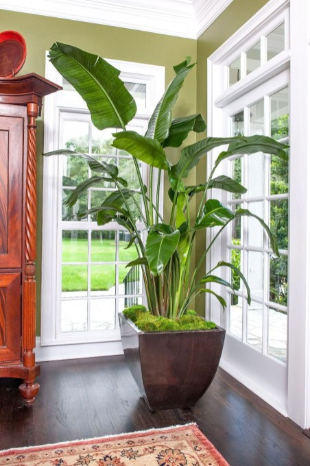 Smart Interior Design Ideas With Plants For Home 37