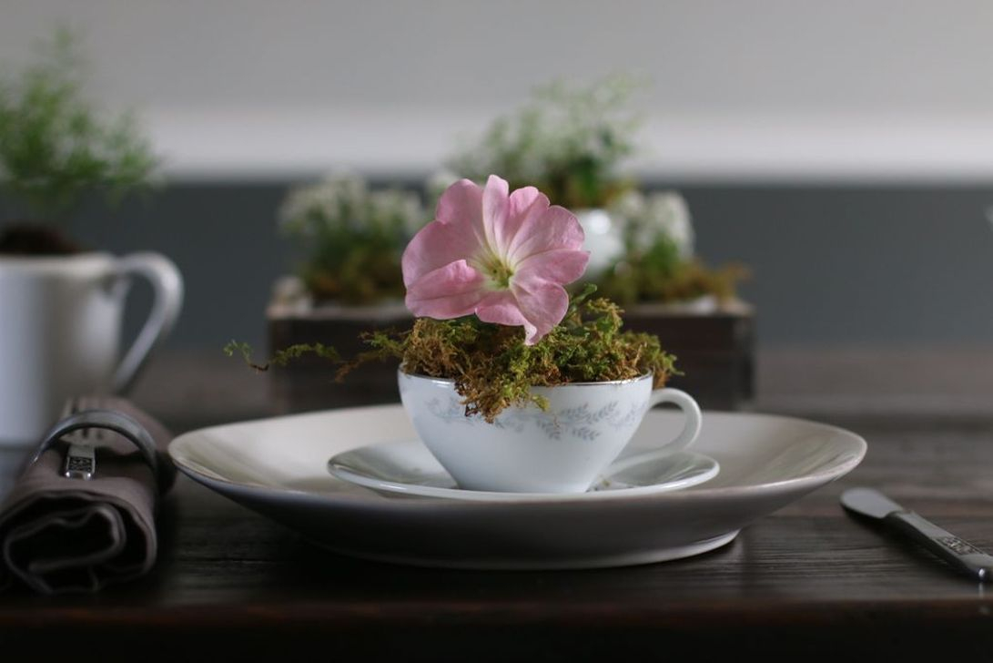 Inspiring Diy Teacup Mini Garden Ideas To Add Bliss To Your Home 13