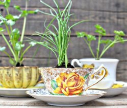 Inspiring Diy Teacup Mini Garden Ideas To Add Bliss To Your Home 37