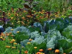 Lovely Vegetable Garden Decoration Ideas For You 04