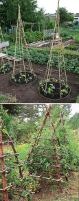 Lovely Vegetable Garden Decoration Ideas For You 14