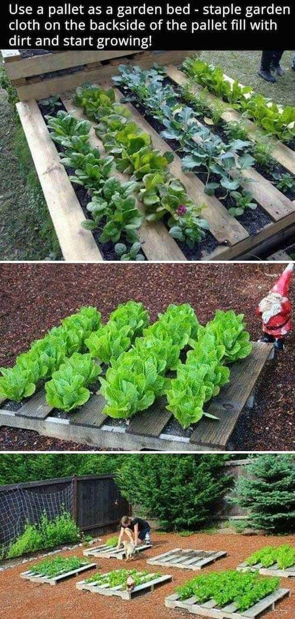 Lovely Vegetable Garden Decoration Ideas For You 19