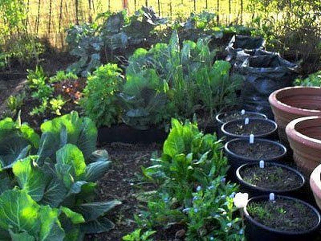 Lovely Vegetable Garden Decoration Ideas For You 23