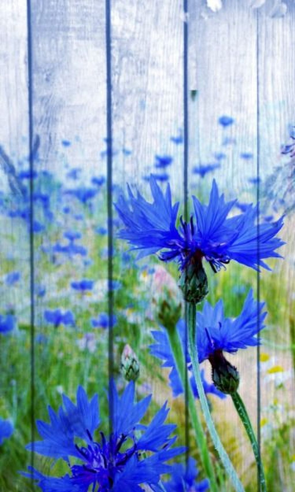 Stylish Diy Painted Garden Decoration Ideas For A Colorful Yard 17