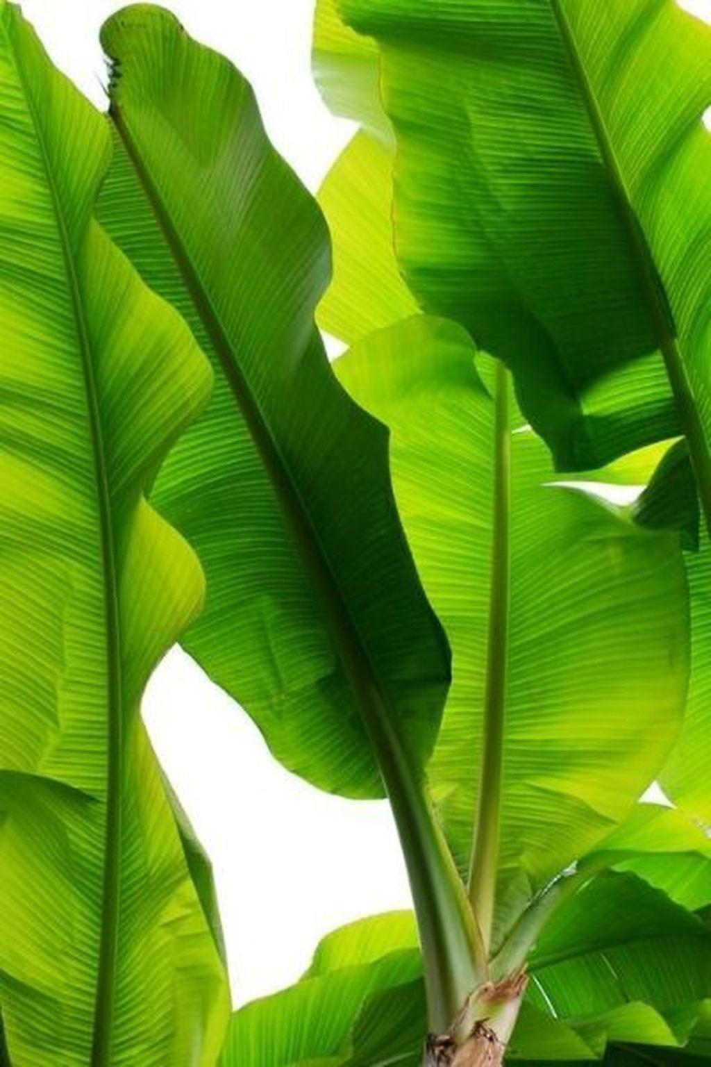 Splendid Tropical Leaf Decor Ideas For Home Design 17