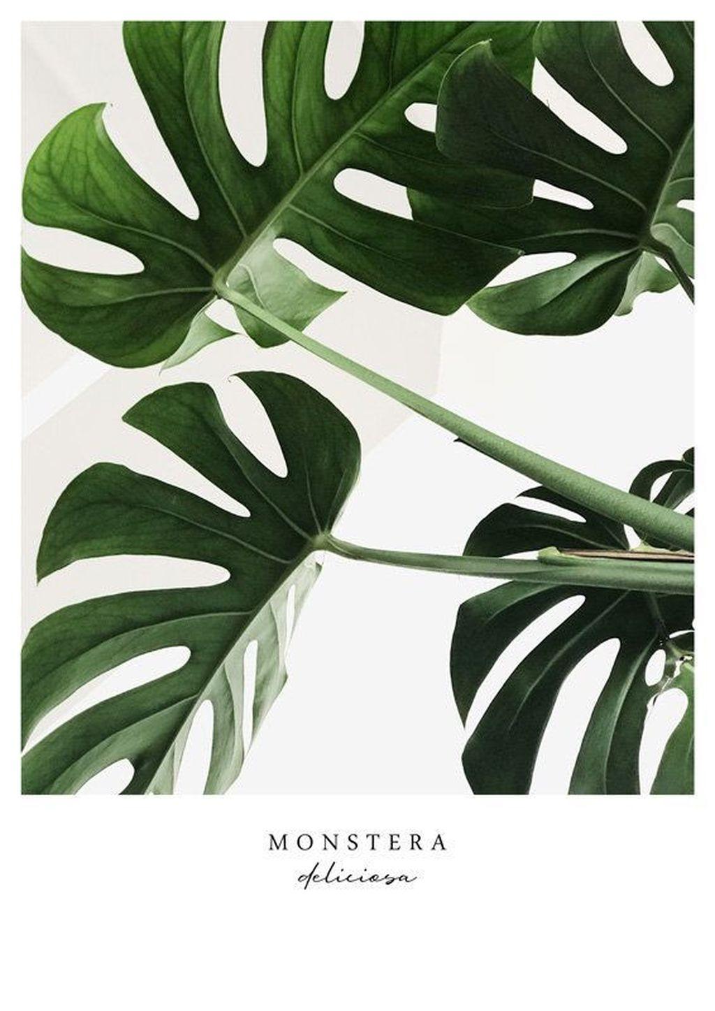 Splendid Tropical Leaf Decor Ideas For Home Design 44