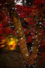 Unusual Lights Design Ideas To Beautify The Garden03
