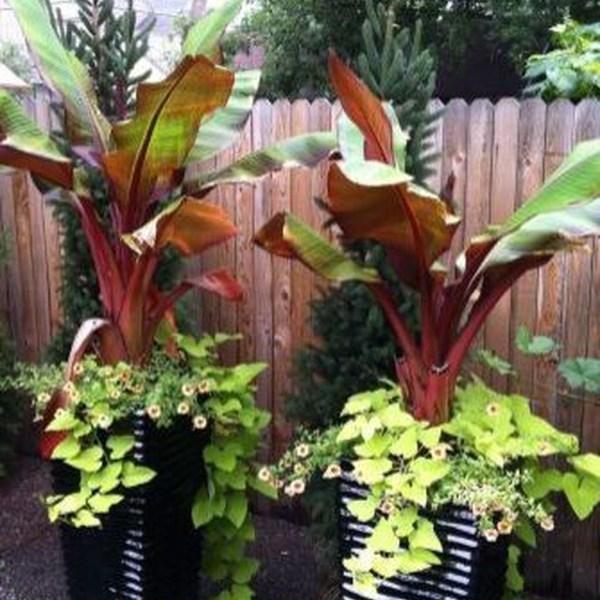 Impressive Summer Planter Design Ideas For Front Yard Decoration 06