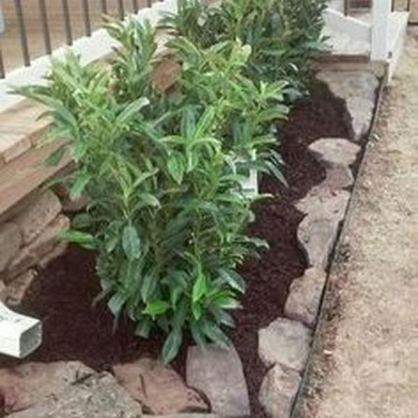 Impressive Summer Planter Design Ideas For Front Yard Decoration 22