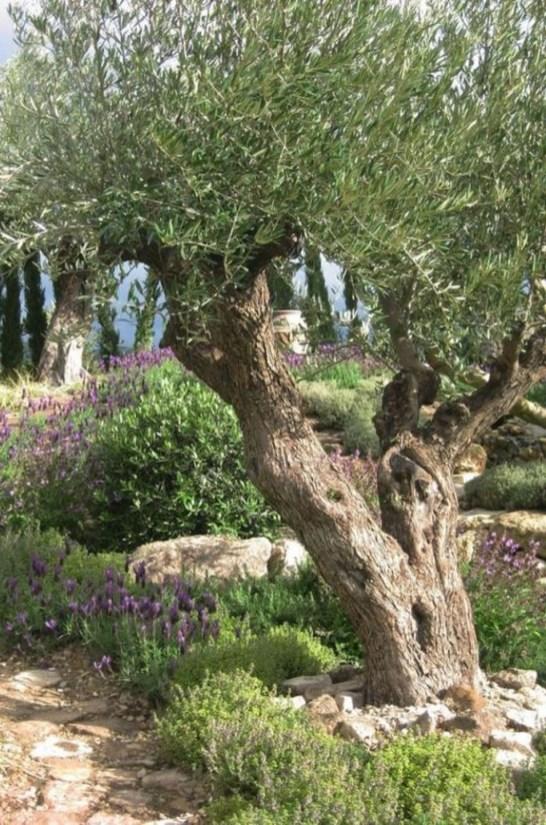 Awesome Mediterranean Garden Design Ideas For Your Backyard 28