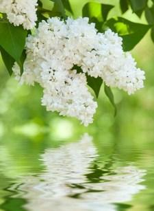 Elegant White Plants Garden Design Ideas For You 11