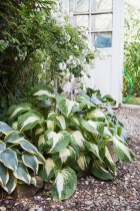 Elegant White Plants Garden Design Ideas For You 14