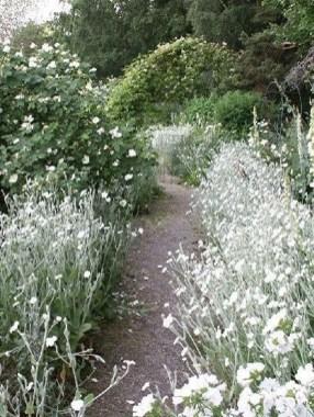 Elegant White Plants Garden Design Ideas For You 15