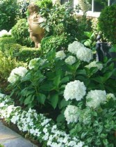 Elegant White Plants Garden Design Ideas For You 16