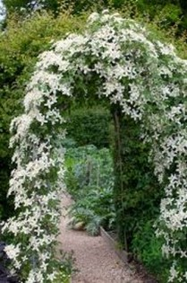 Elegant White Plants Garden Design Ideas For You 21