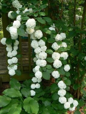 Elegant White Plants Garden Design Ideas For You 25