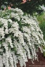 Elegant White Plants Garden Design Ideas For You 28