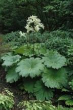 Elegant White Plants Garden Design Ideas For You 29