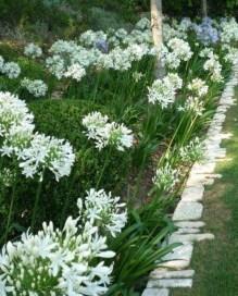 Elegant White Plants Garden Design Ideas For You 32