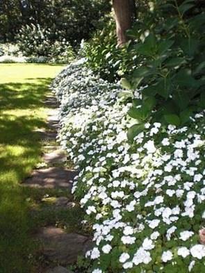 Elegant White Plants Garden Design Ideas For You 34