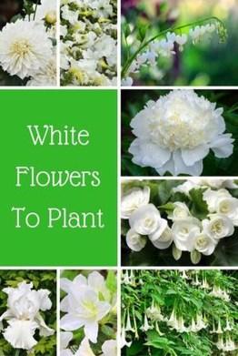 Elegant White Plants Garden Design Ideas For You 35