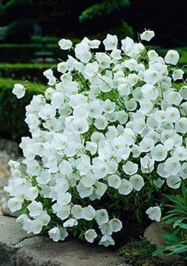 Elegant White Plants Garden Design Ideas For You 39