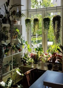 Favorite Home Patio Design Ideas With Best Hanging Plants 21
